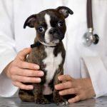 Лапароскопическая стерилизация собак