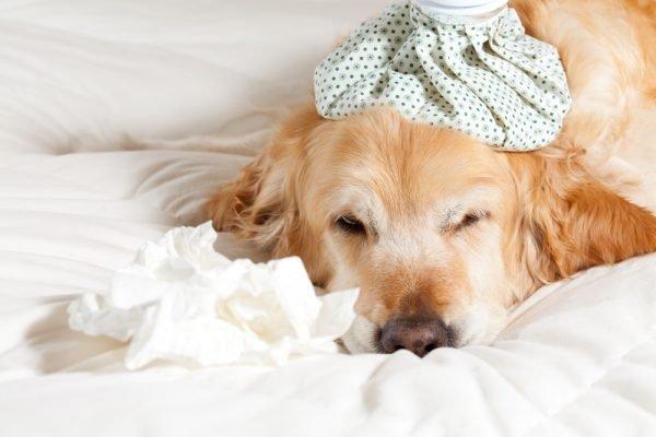 Как понять, что собака больна