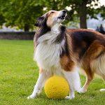 Как научить собаку лаять