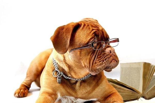 Глаукома у собак