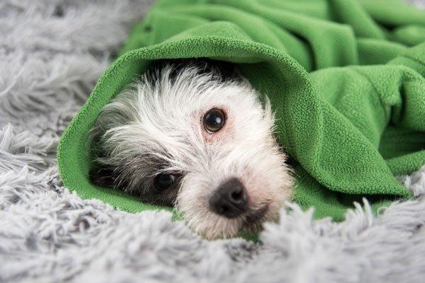 Как понять, что щенок заболел