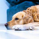 Кожные заболевания собак - симптомы, лечение