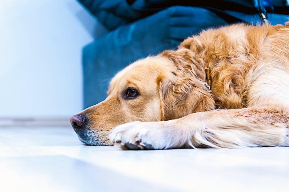 Кожные заболевания собак