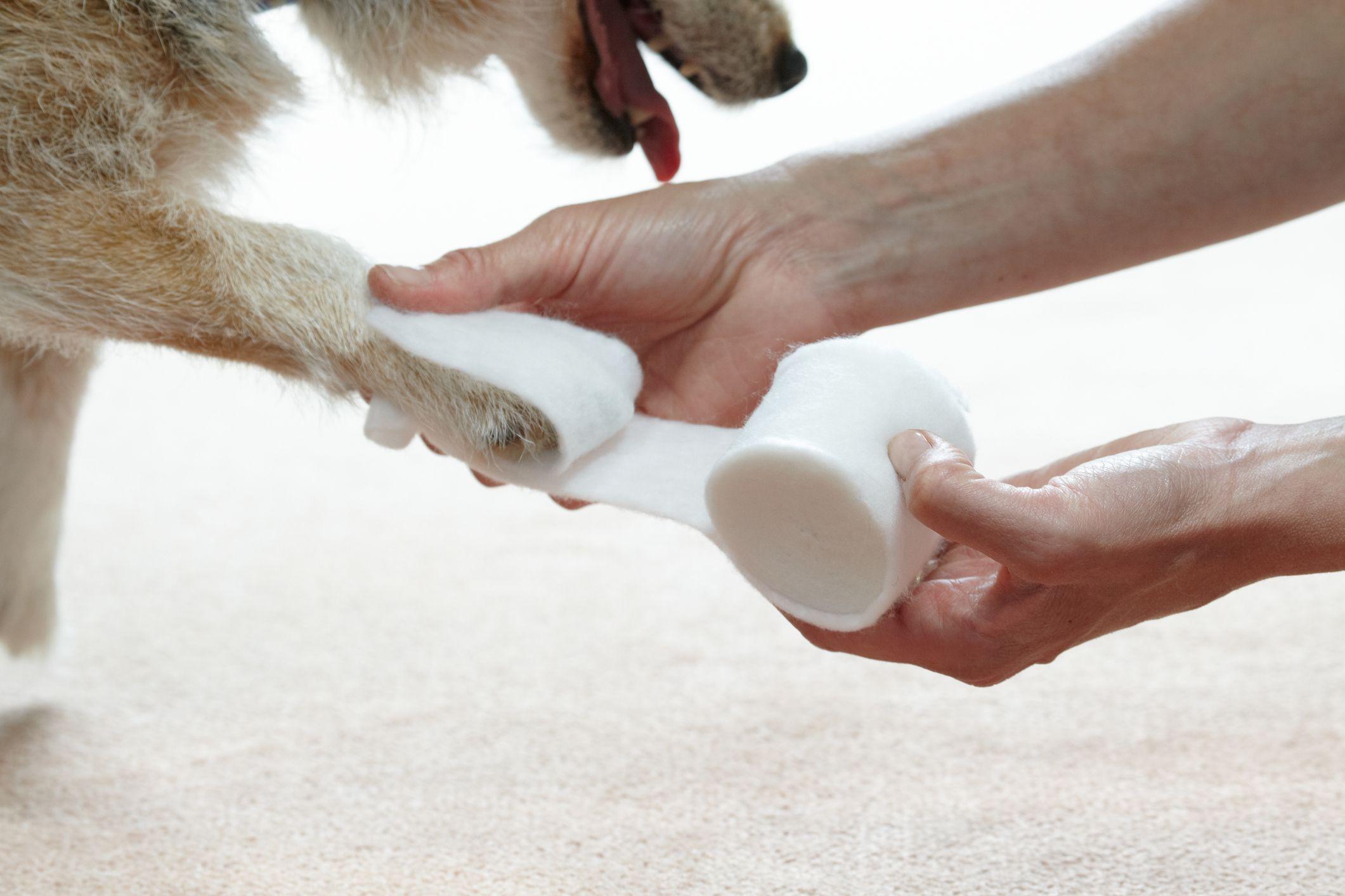 Травмы у собак первая помощь