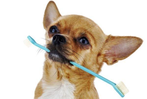 Гигиена щенков
