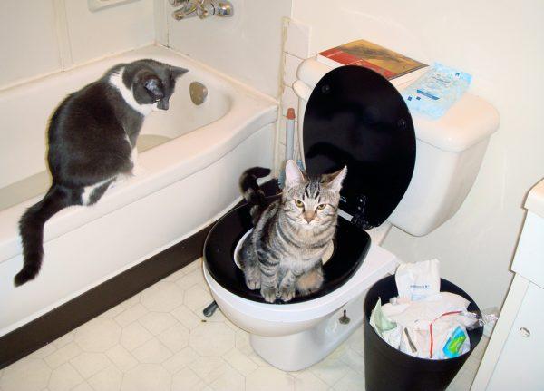Понос у кошки причины