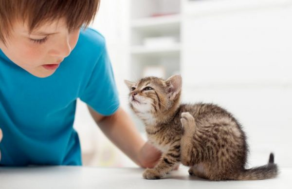 Рвота у кошек чего следует бояться