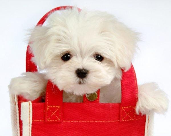 Стоит ли заводить собаку