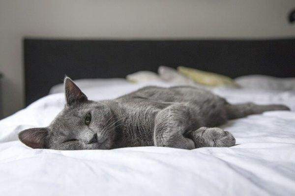 Кошка заболела что делать