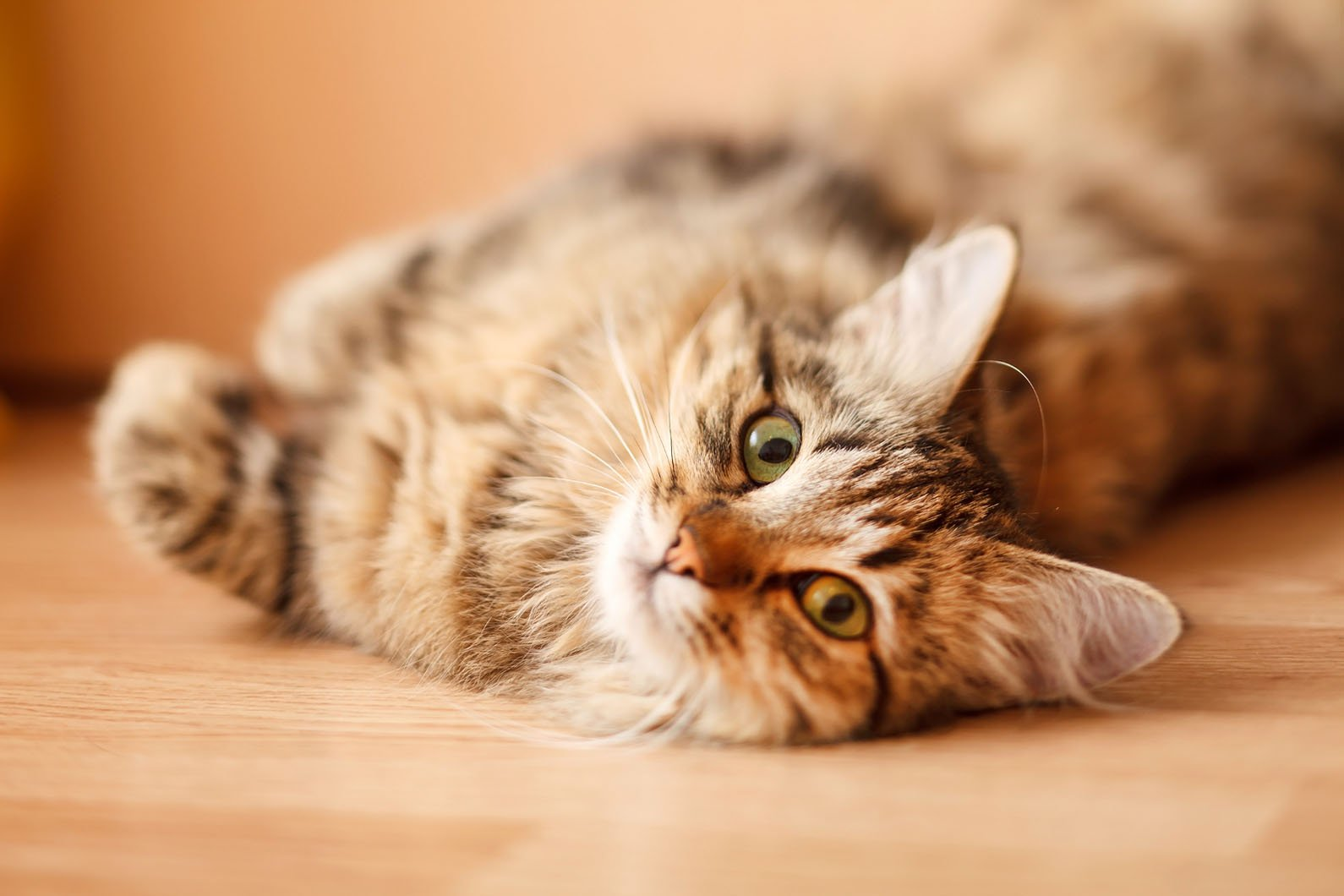 Стерилизация кошек плюсы и минусы