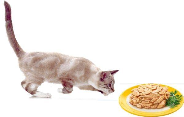 Элитные корма для кошек