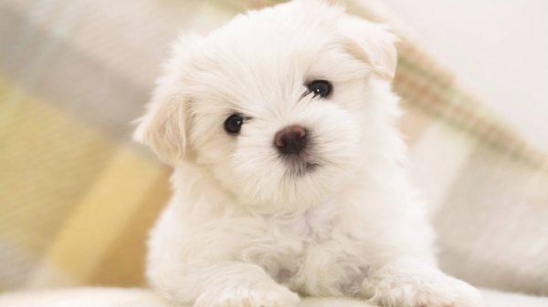 Где купить щенка - где можно купить щенка