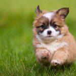 Где купить щенка