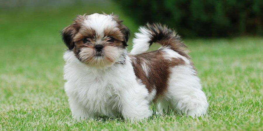 Если вы решили купить собаку