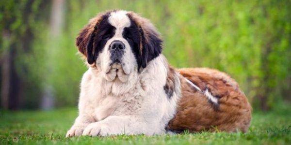 Какую породу собаки завести