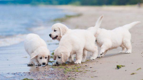 Как выбрать здорового щенка