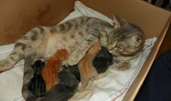 Роды у кошки признаки начала родов у кошки