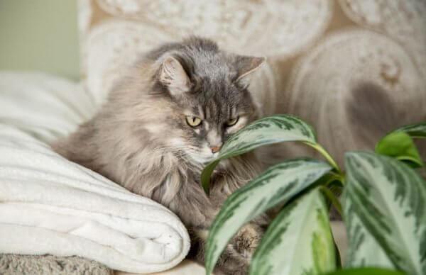 Почему кошки едят цветы в горшках