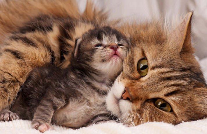 Почему у кошки нет молока