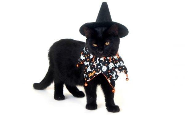 Черные кошки приметы