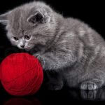 Адаптация котенка в новом доме