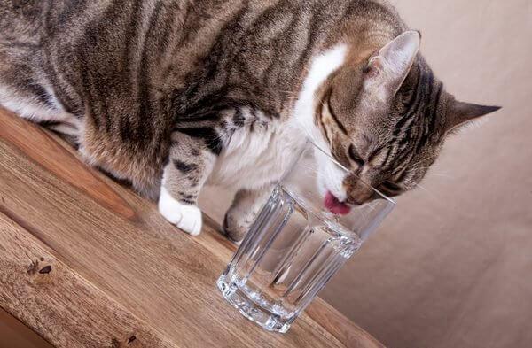 Почему кошки икают