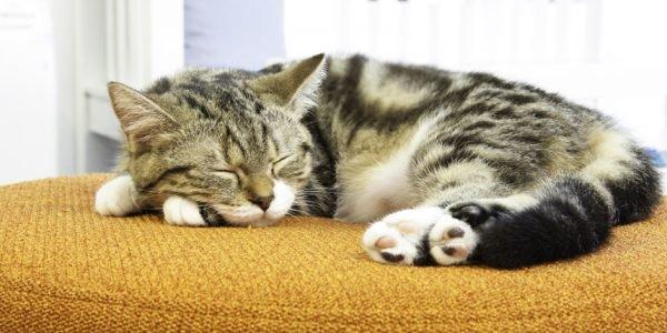 Почему кошка во сне дергается