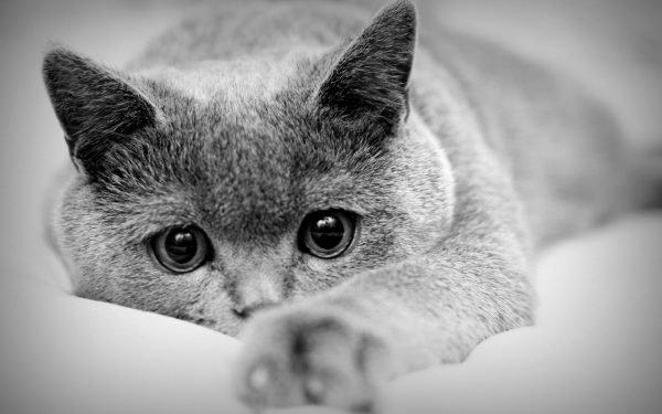 Стерилизация кошек и последующий уход