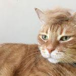 Почему кошка сильно линяет