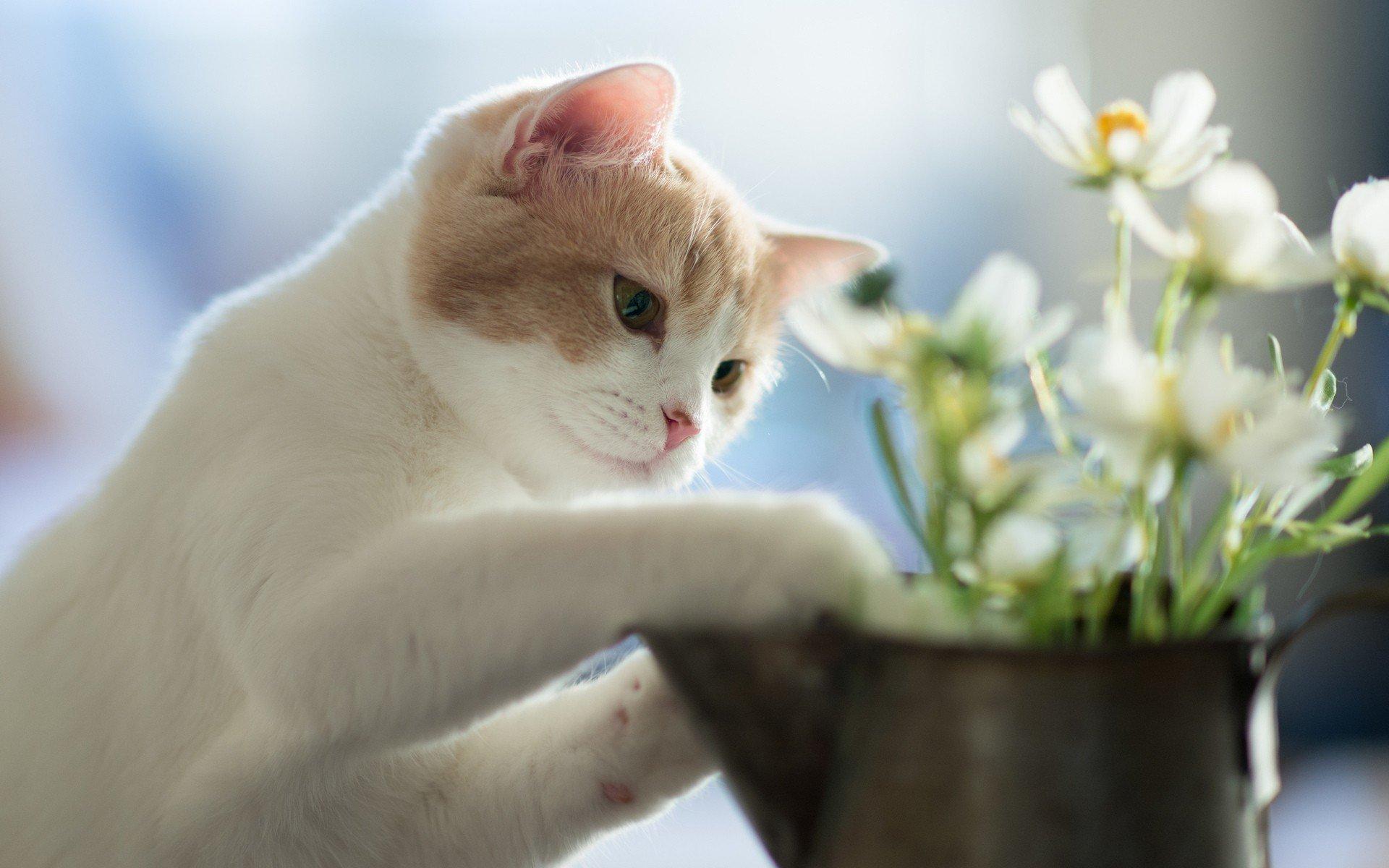 Опасные растения для кошек