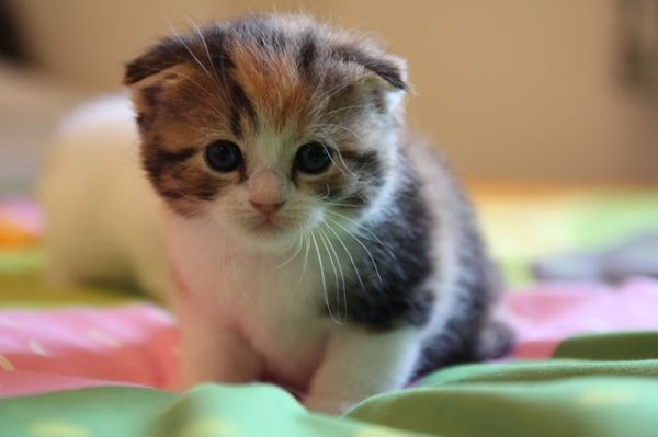 Полезные советы тем кто решил завести котенка