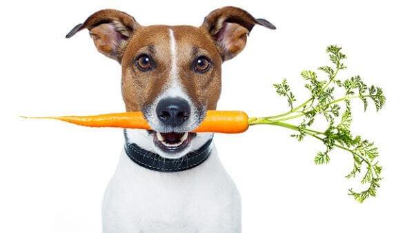 Можно ли собакам давать морковь сырую или вареную