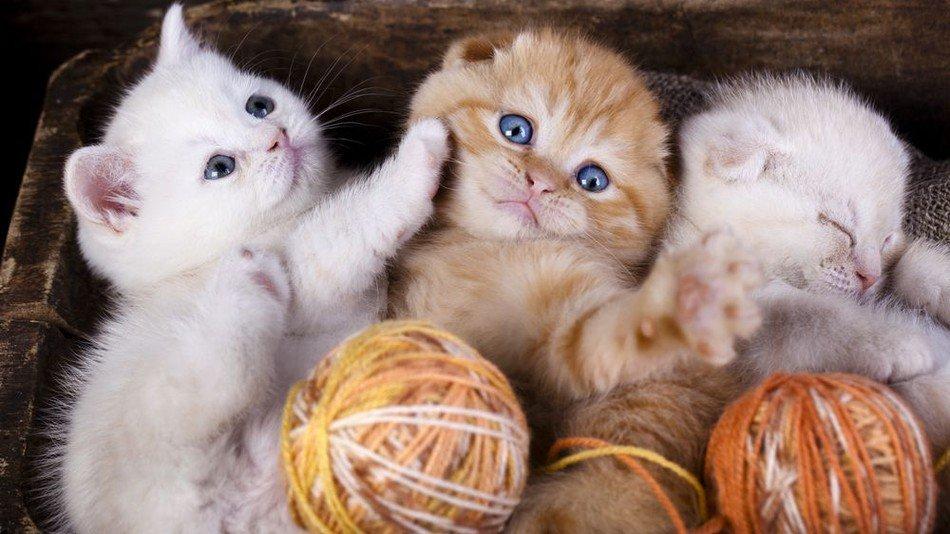 Кошка в дом принесет удачу и благополучие