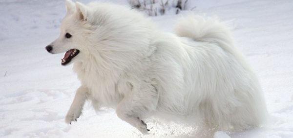Высокий холестерин у собак