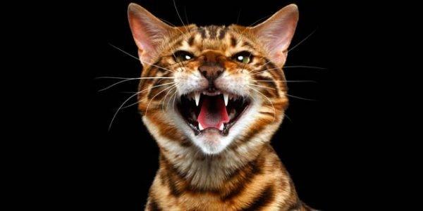 Почему кошка кричит по ночам
