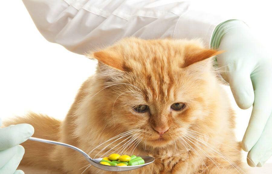 Витамины для кошки
