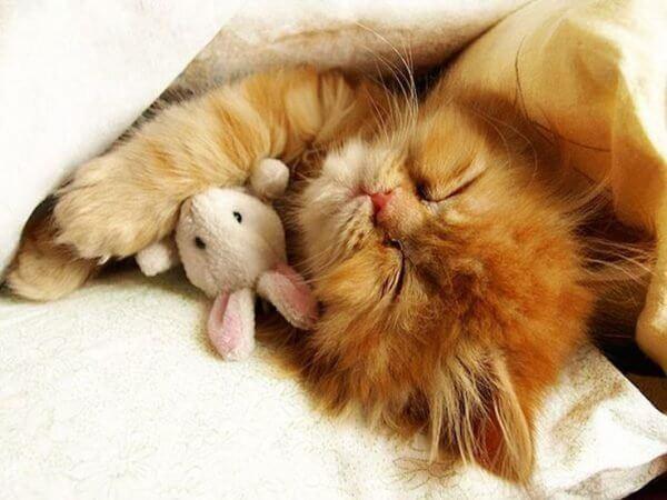 Почему кошка все время спит