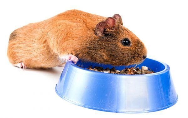 Витамины для морских свинок