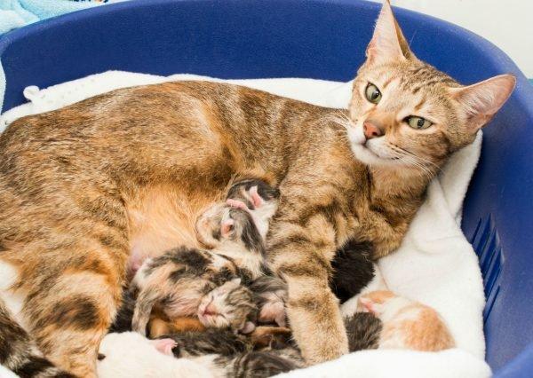 Роды у кошки как помочь