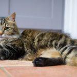 Как обеспечить кошке наилучший уход