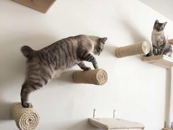 Почему кошки любят сидеть наверху