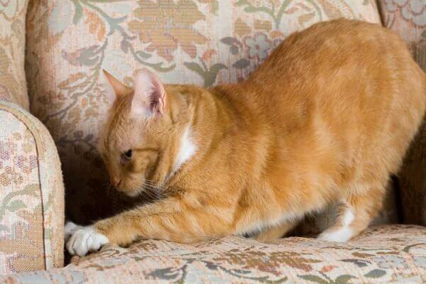 Почему кошки топчутся