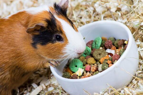Зерновые смеси для морских свинок