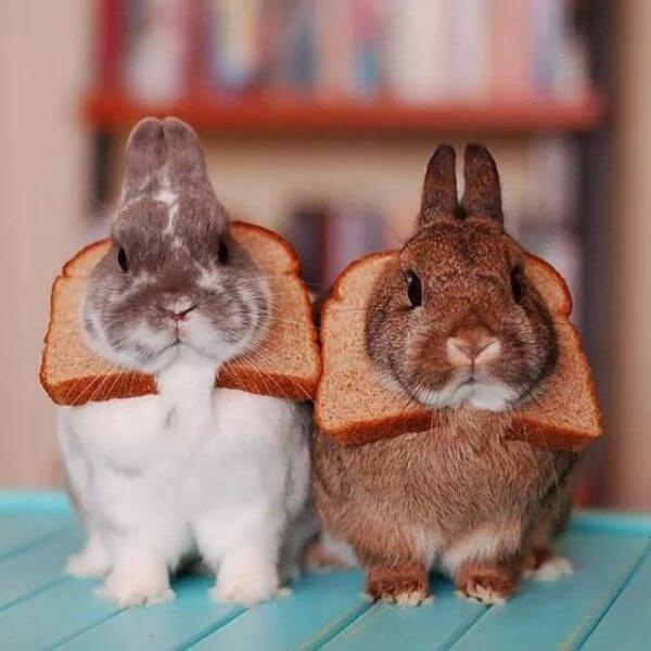 Если вы хотите побаловать своего декоративного кролика и не навредить его здоровью, лучше дайте вместо хлеба яблоко, морковь, зелень, грушу.
