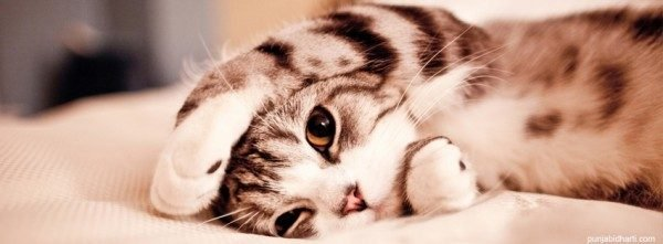 Болезни сердечно-сосудистой системы у кошек