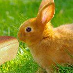 Можно ли кроликам хлеб