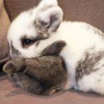Можно ли кроликам картошку