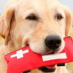 Доврачебная помощь при травмах собак
