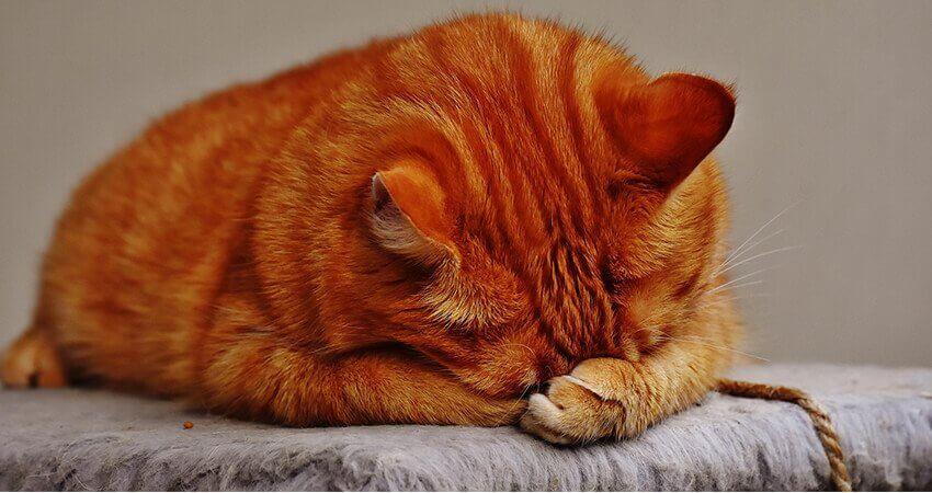 Почему у кошки слезятся глаза