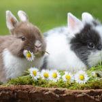 Почему кролик грызет клетку